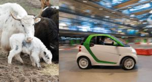11./12.09.2018: I.VW Jahrestagung – die andere Tagung